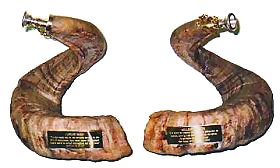 Black Rams Horns